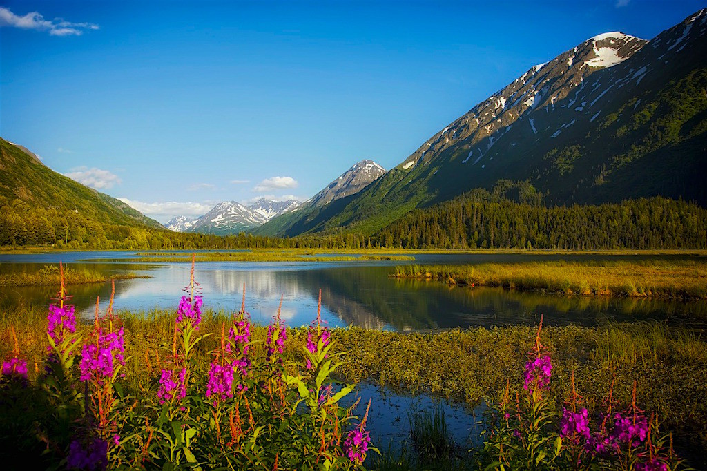 Alaskan spring flowers near a lake