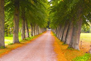A tree lined path in Denmark