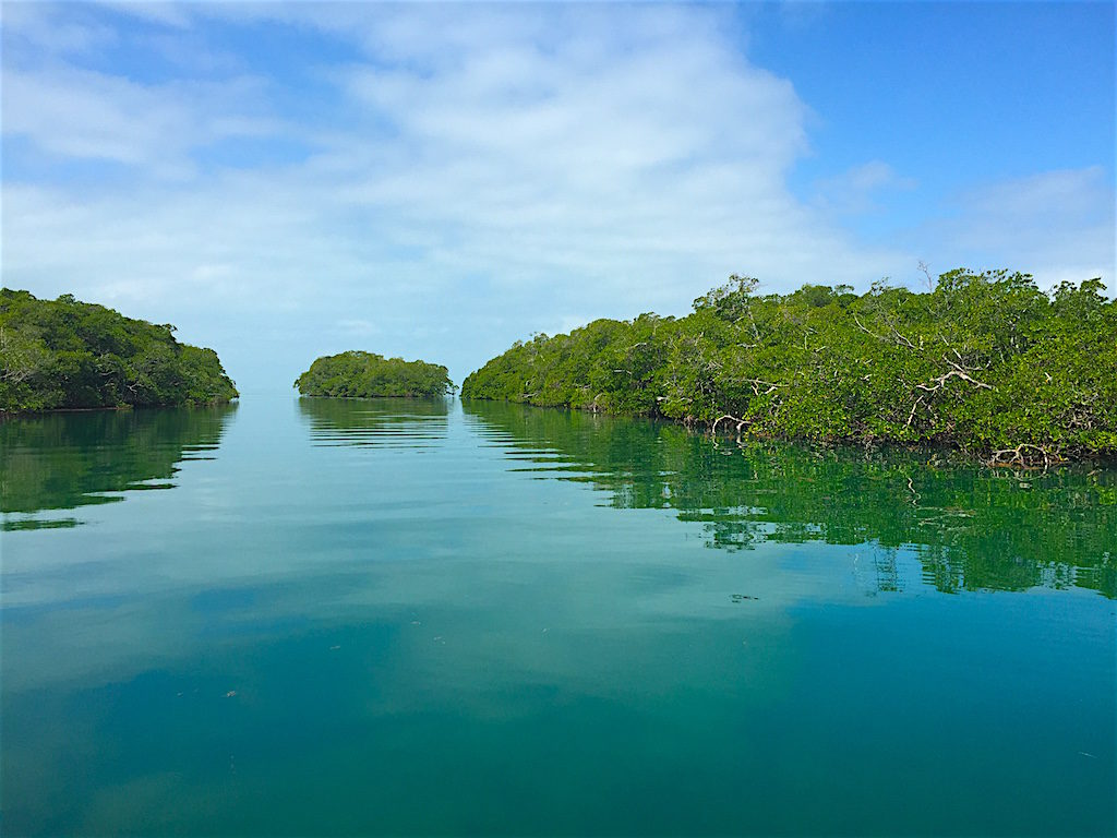 Mangrove swamps off the coast of Belize